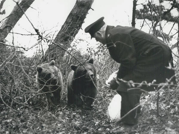 retro Images Archive Poster featuring the photograph Bears Still At Large On The Isle Of Wight by Retro Images Archive