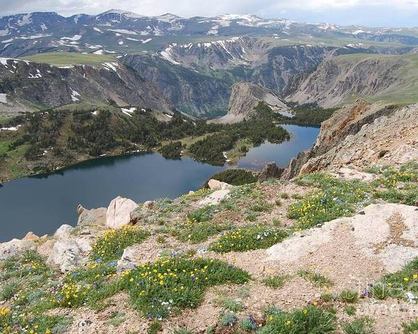 Landscapes Poster featuring the photograph Beartooth Wildflowers by Deanna Cagle