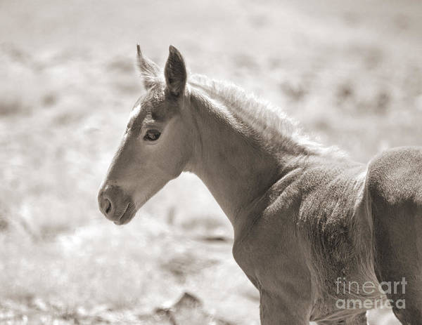 Foal Poster featuring the photograph Beautiful Colt by Lula Adams