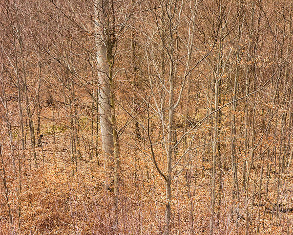 Trees Poster featuring the photograph Beautiful Fine Structure Of Trees Brown And Orange by Matthias Hauser
