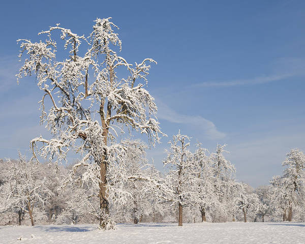 Winter Poster featuring the photograph Beautiful Winter Day With Snow Covered Trees And Blue Sky by Matthias Hauser