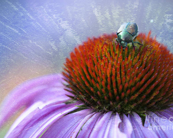 Beauty In Nature Poster featuring the photograph Beetlemania by Juli Scalzi