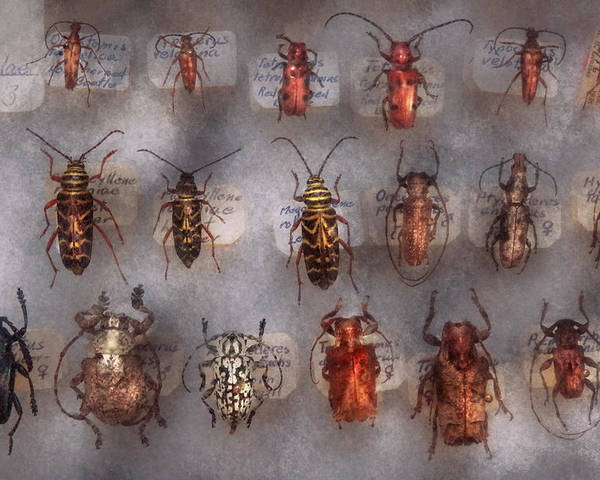Bugs Poster featuring the photograph Beetles - The Usual Suspects by Mike Savad