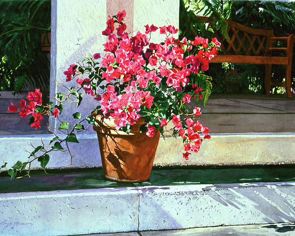 Bel-air Poster featuring the painting Bel-air Bougainvillea Pot by David Lloyd Glover