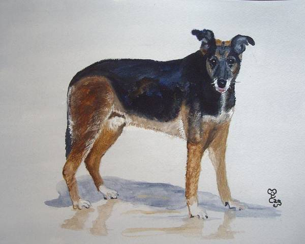 Dog Poster featuring the painting Ben by Carole Robins