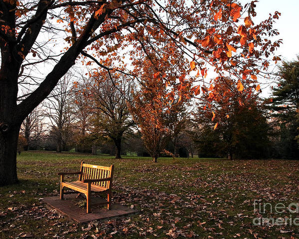 Bench Under The Tree Poster featuring the photograph Bench Under The Tree by John Rizzuto