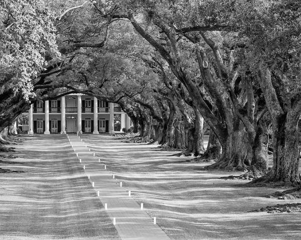Oak Alley Plantation Poster featuring the photograph Beneath Live Oaks Bw by Steve Harrington