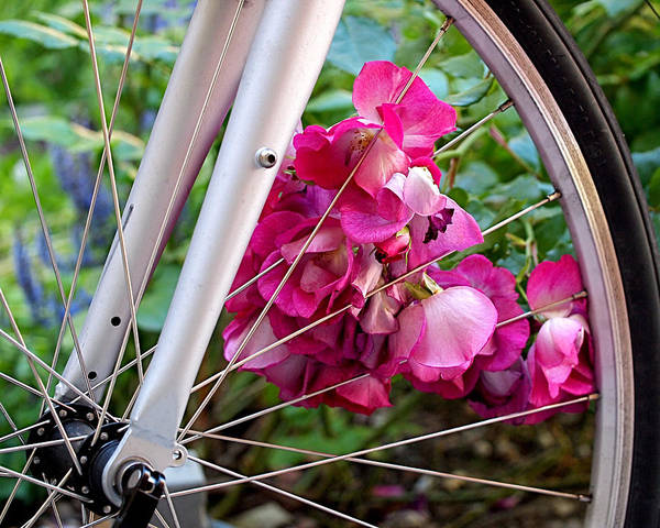 Bicycle Poster featuring the photograph Bespoke Flower Arrangement by Rona Black
