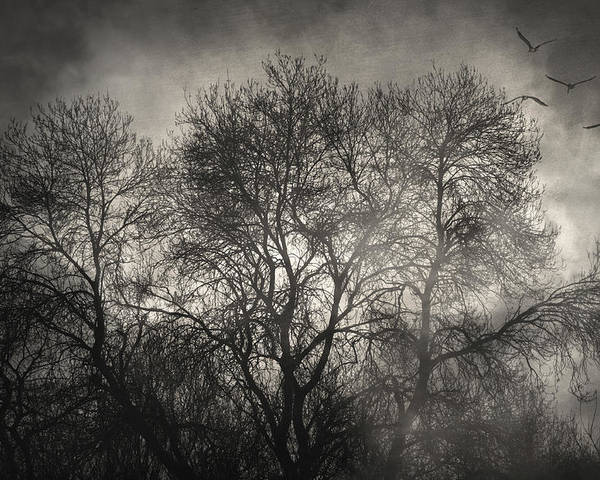 Trees Poster featuring the photograph Beyond The Morning by Taylan Apukovska