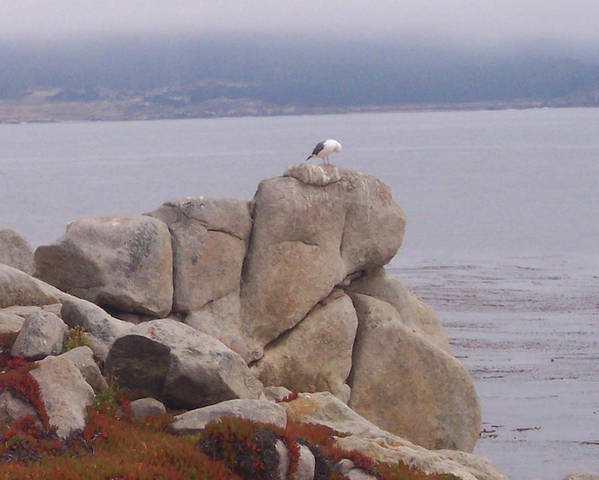 Bird Poster featuring the photograph Bird On A Rock by Pharris Art