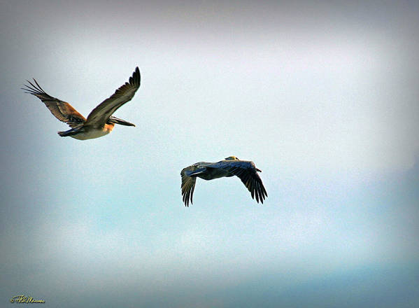 Coastal Scene Poster featuring the photograph Birds Of A Feather by Phil Mancuso