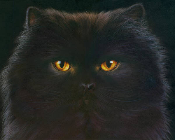 Andrew Farley Poster featuring the photograph Black Persian by MGL Meiklejohn Graphics Licensing