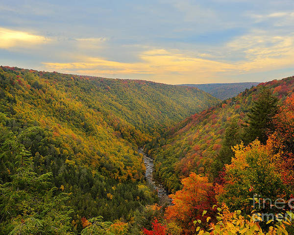 Blackwater Poster featuring the photograph Blackwater Gorge With Fall Leaves by Dan Friend
