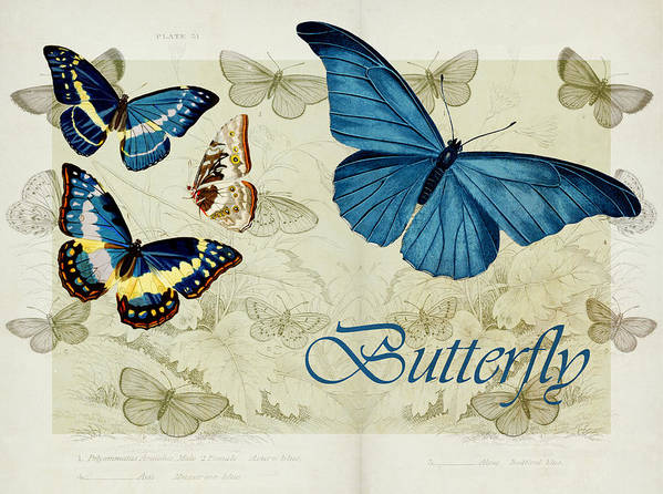 Butterfly Poster featuring the digital art Blue Butterfly - S01a by Variance Collections