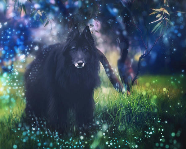 Belgian Sheepdog Poster featuring the photograph Belgian Sheepdog Art by Wolf Shadow Photography