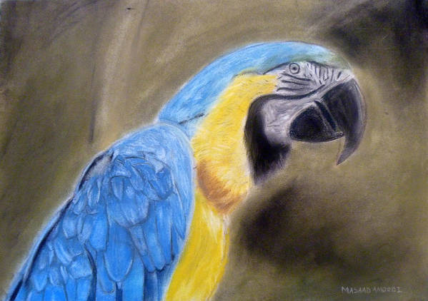 Macaw Poster featuring the painting Blue Macaw by Masaad Amoodi