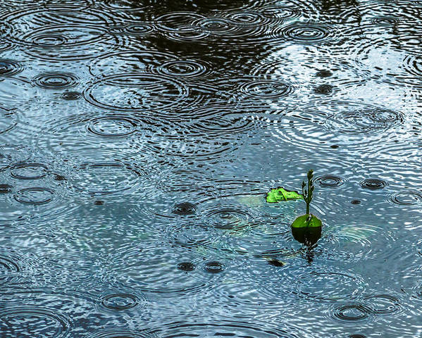 Background Poster featuring the photograph Blue Rain - Featured 3 by Alexander Senin
