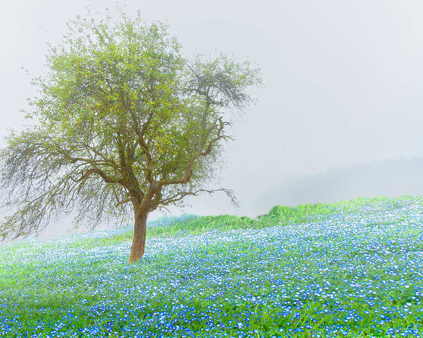 Appalachia Poster featuring the photograph Bluebells by Debra and Dave Vanderlaan
