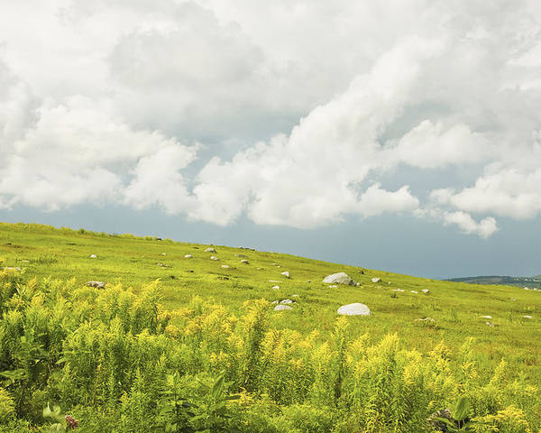 Blueberry Poster featuring the photograph Blueberry Field And Goldenrod With Dramatic Sky In Maine by Keith Webber Jr