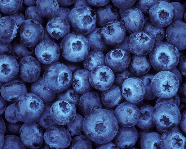 Blueberries Poster featuring the photograph Blueberry Harvest by Greg Vaughn