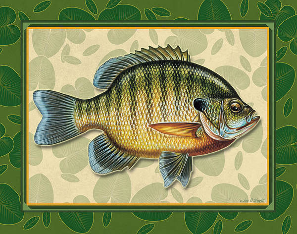 Bluegill Poster featuring the painting Blugill And Pads by JQ Licensing