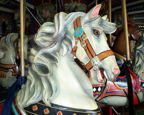 Carousel Poster featuring the photograph Bob by Barbara McDevitt