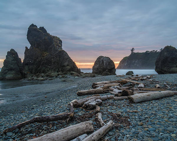 Olympic National Park Poster featuring the photograph Bone Yard by Kristopher Schoenleber