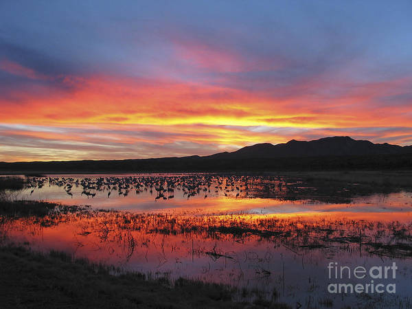 Sandhill Cranes Poster featuring the photograph Bosque Sunset I by Steven Ralser