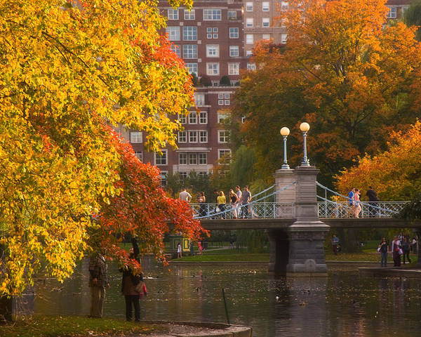 Willow Poster featuring the photograph Boston Public Garden Lagoon Bridge by Joann Vitali