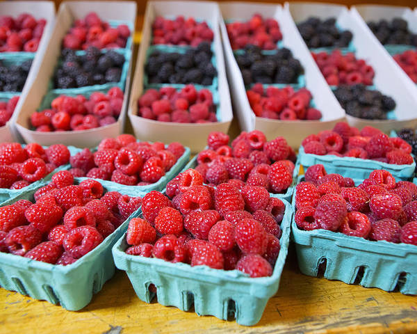 Raspberries Poster featuring the photograph Bounty Of Berries by Caitlyn Grasso