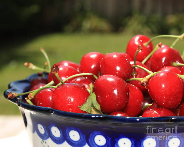 Cherries Poster featuring the photograph Bowl Of Cherries In The Garden by Carol Groenen
