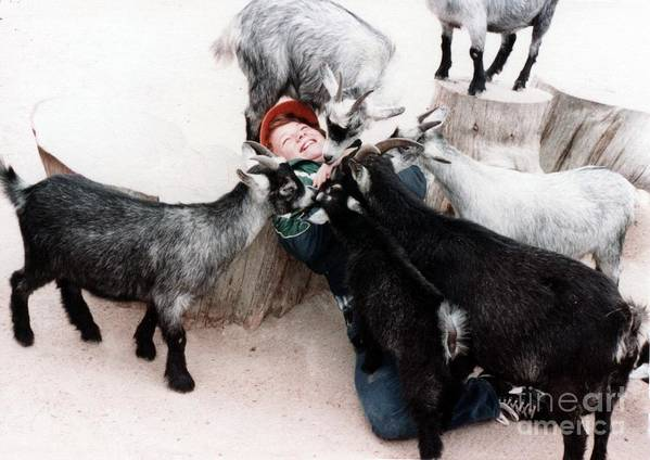 Boys Poster featuring the photograph Boy Surrounded By Hungry Goats by Jim Fitzpatrick