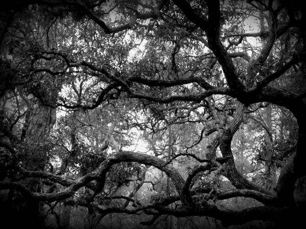 Tree Poster featuring the photograph Branch Out by Sheri McLeroy