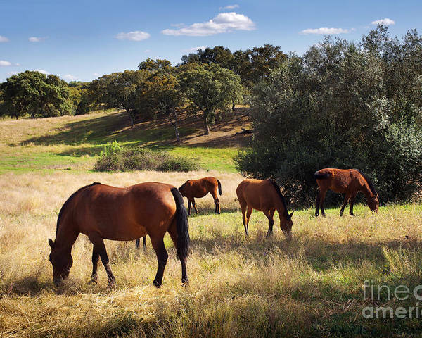 Agriculture Poster featuring the photograph Breed Of Horses by Carlos Caetano