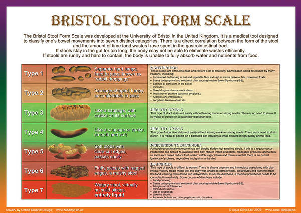 Bristol Stool Form Scale Poster By Galina Imrie