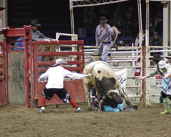 Bulls Fighters Rodeo Cowboy  Poster featuring the photograph Bull Fighter Rescue by John Pratt