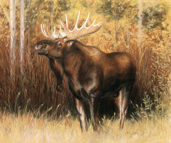 Bull Moose Poster featuring the pastel Bull Moose by Karen Cade