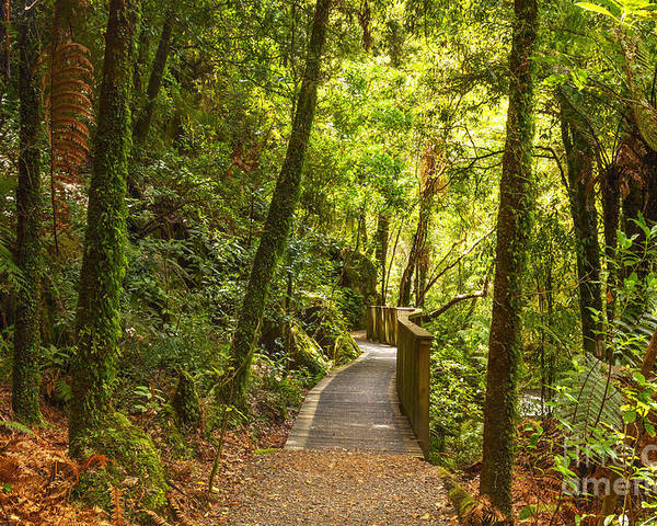 Forest Poster featuring the photograph Bush Pathway Waikato New Zealand by Colin and Linda McKie
