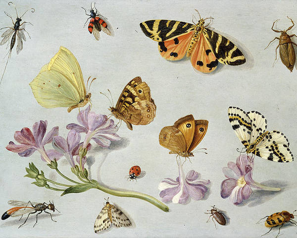 Still Life Poster featuring the painting Butterflies by Jan Van Kessel