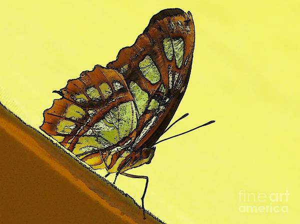 Green Poster featuring the photograph Butterfly by Rhea Winscom