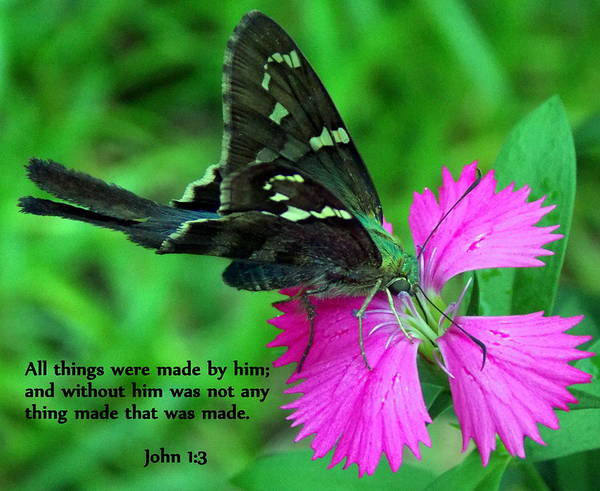 Scripture Poster featuring the photograph By Him All Things by Sheri McLeroy
