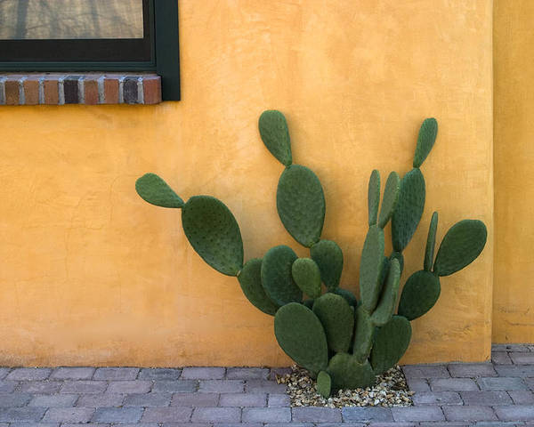 Tucson Poster featuring the photograph Cactus and Yellow Wall by Carol Leigh
