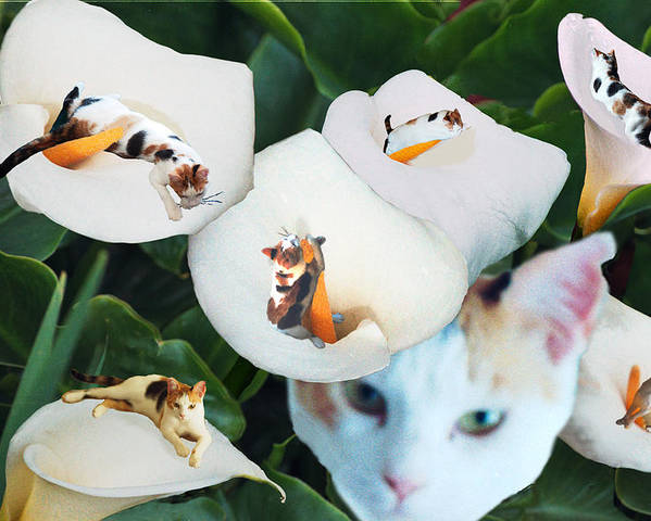 Cat Poster featuring the digital art Cala In Callas by Lisa Yount