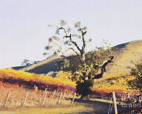 California Wine Country Poster featuring the painting California Vineyard Series Oaks In The Vineyard by Artist and Photographer Laura Wrede