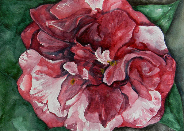 Camelia Poster featuring the painting Camelia by Judy Bruning
