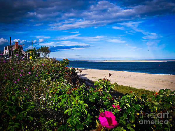 Beach Poster featuring the photograph Cape Cod Beach by Charlene Gauld