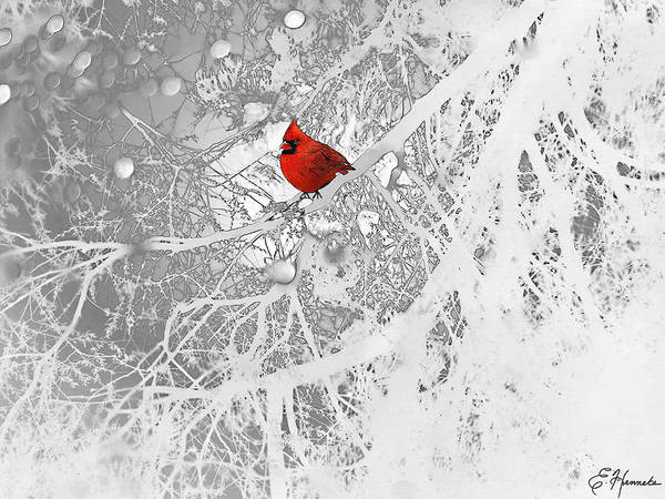Cardinal In Winter Poster featuring the drawing Cardinal In Winter by Ellen Henneke
