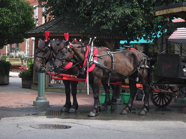 Horses Poster featuring the photograph Carriage Horses At City Market by Linda Ryan