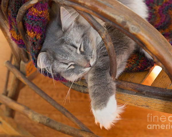 Cat Poster featuring the photograph Cat Asleep In A Wooden Rocking Chair by Louise Heusinkveld