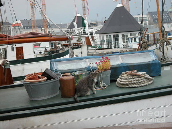 Cats Poster featuring the photograph Cat On Boat by Jim Goodman